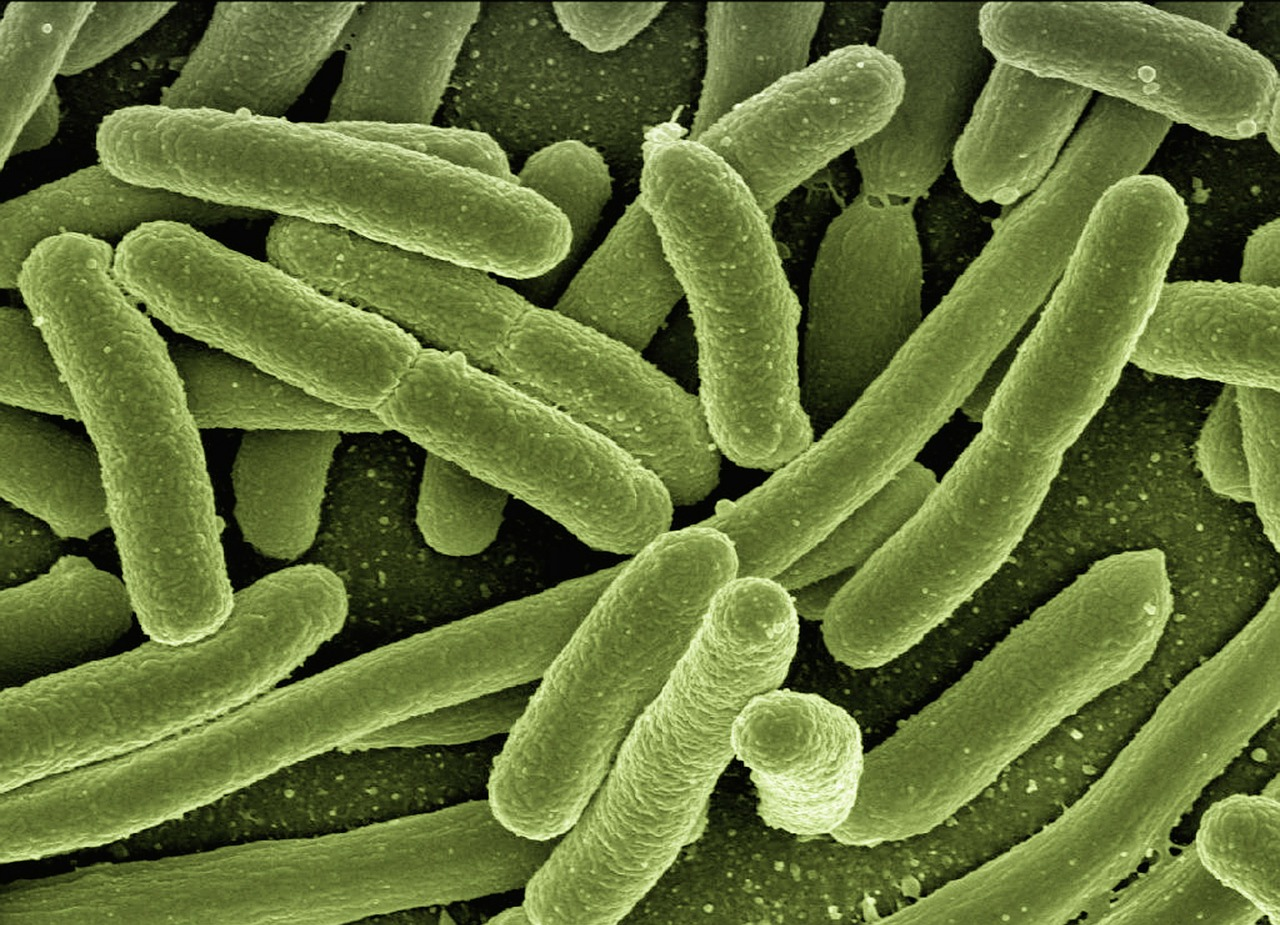 New and Exciting Research on Gut Bacteria